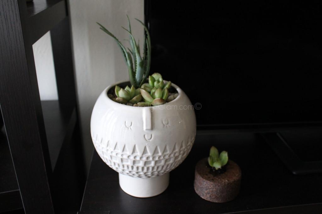 Easy-Indoor-Plants_1