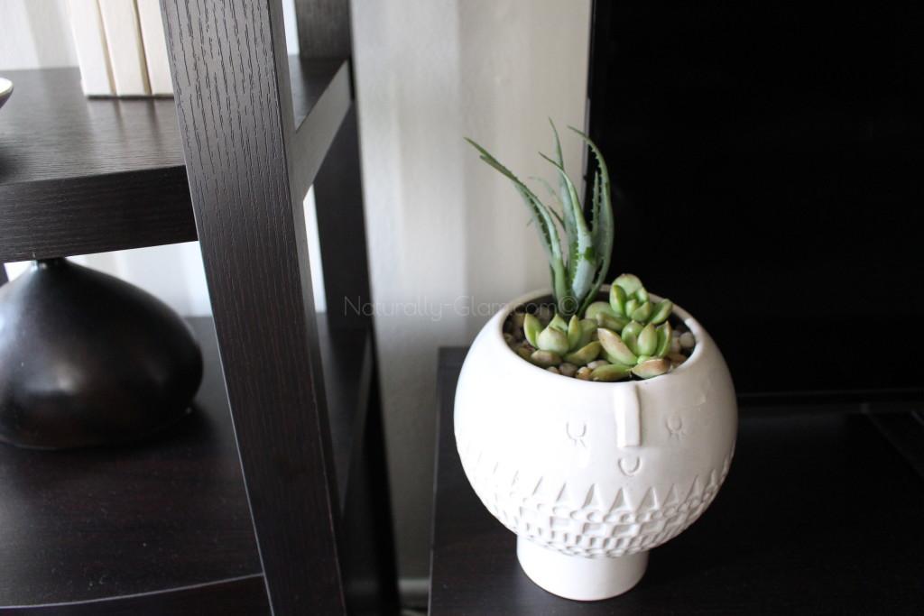 aloe vera plant and stonecrop sedum in ceramic planter