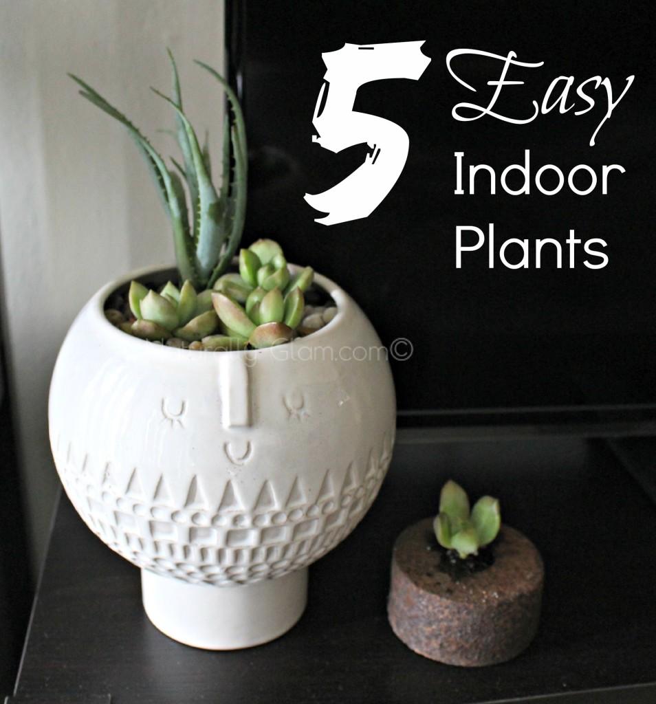 easy indoor plants, aloe vera and stonecrop sedum
