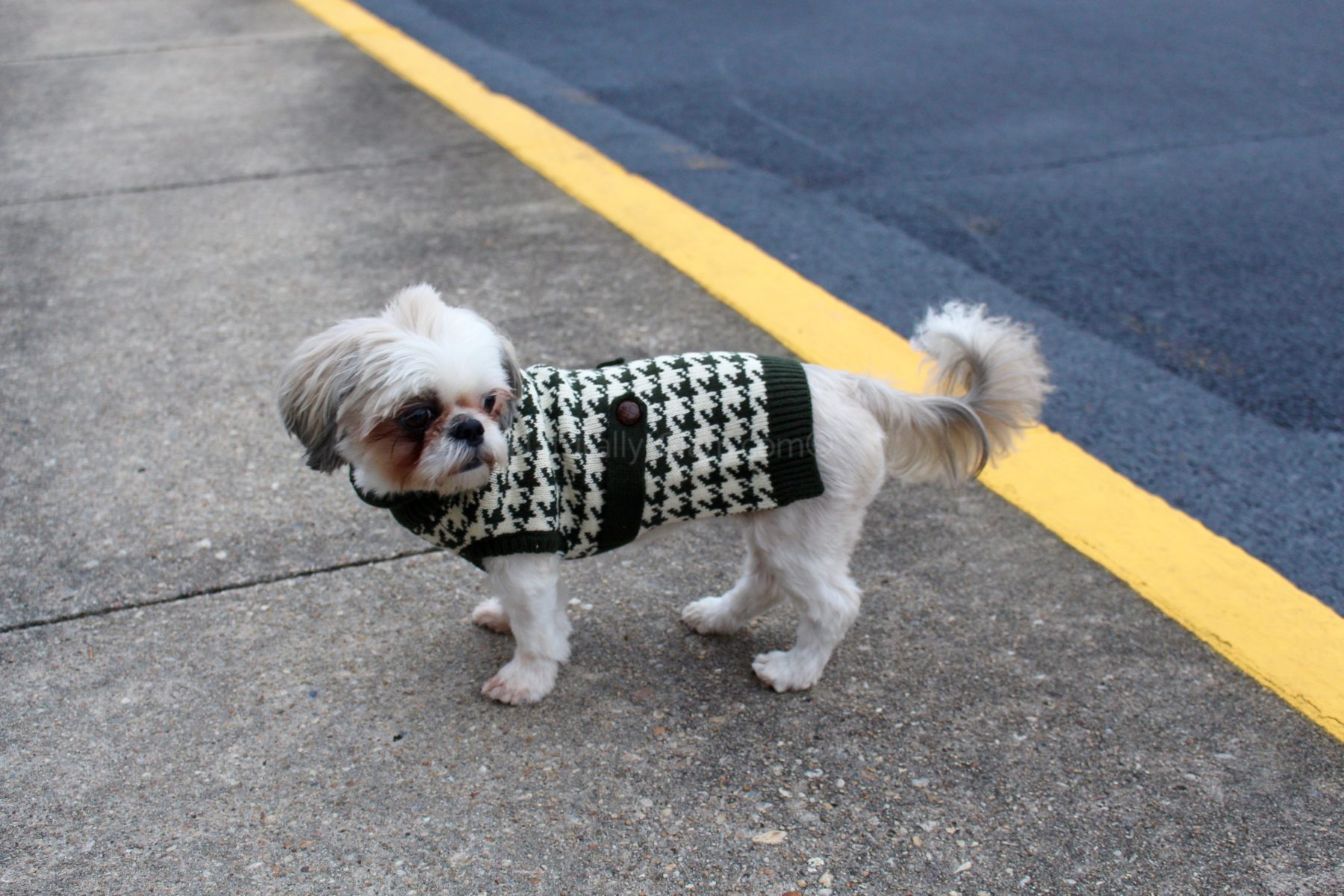 Dog Houndstooth Sweater