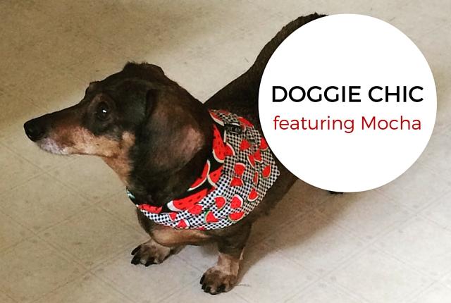 Mocha the Dachshund is Doggie Chic