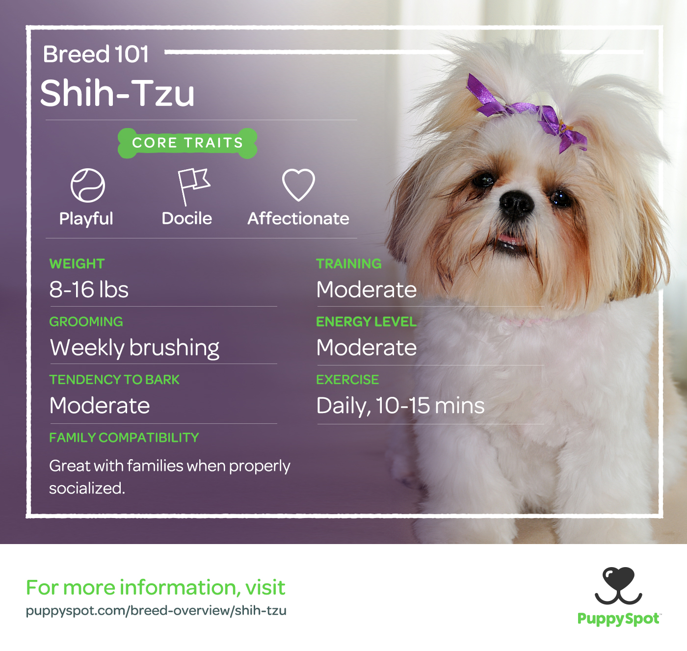 shih-tzu breed 101